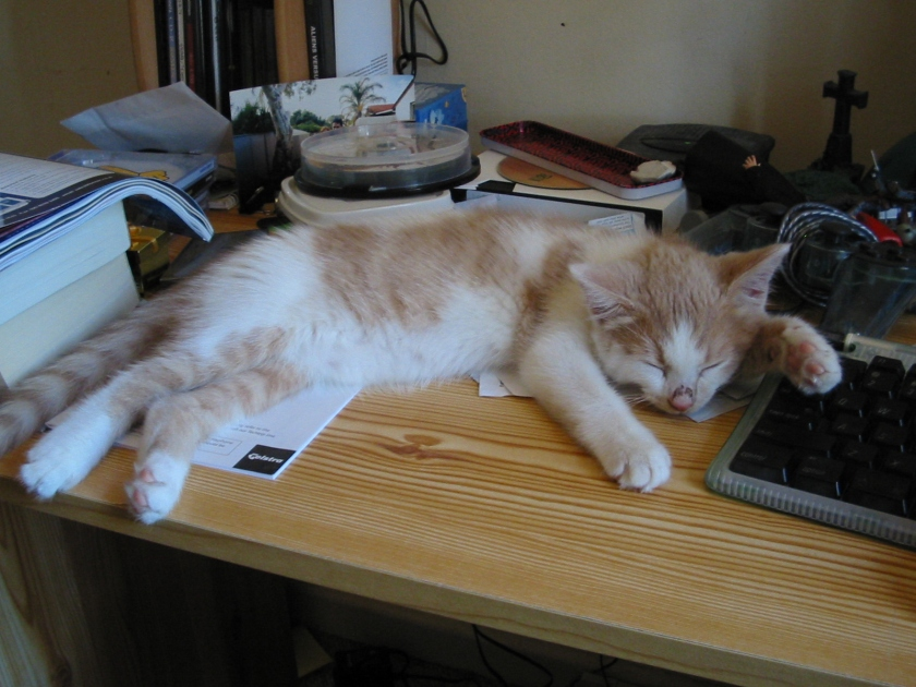 Toby loved sleeping on my desk as I worked. This was taken around 1 month after we got him.